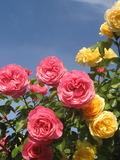 Rendez Vous aux Jardins 2018 -Visite libre du jardin des mille fleurs