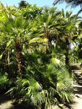 Rendez Vous aux Jardins 2018 -Visite libre du Jardin Georges Delaselle