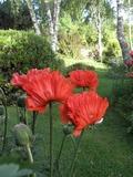 Journées du patrimoine 2016 -Visite libre du jardin