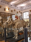Journées du patrimoine 2016 -Visite libre du musée Fragonard de l'École nationale vétérinaire d'Alfort