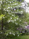 Journées du patrimoine 2016 -Visite libre du parc de Tancognaguet
