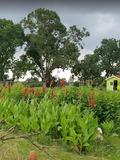 Rendez Vous aux Jardins 2018 -Visite libre et commentée (samedi 14h-18h) du jardin pédagogique de Fleurville