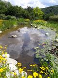 Rendez Vous aux Jardins 2018 -Découverte de l'univers des plantes aquatiques