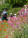 Rendez Vous aux Jardins 2018 -Visite ludique et pédagogique du Jardin Conservatoire des Plantes Tinctoriales