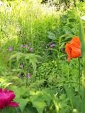 Rendez Vous aux Jardins 2018 -Visite réservée aux scolaires