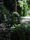 Rendez Vous aux Jardins 2018 -Visite thématique: Romantique et Buis