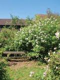 Rendez Vous aux Jardins 2018 -Visites guidées et petites histoires insolites