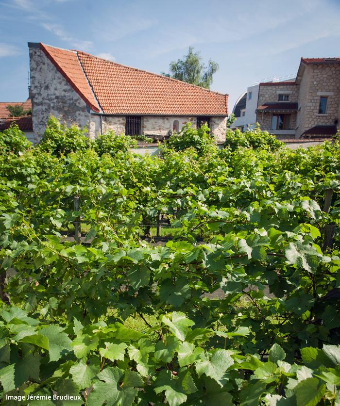 Journées du patrimoine 2020 - Visite des vignes et de la grange de Clamart
