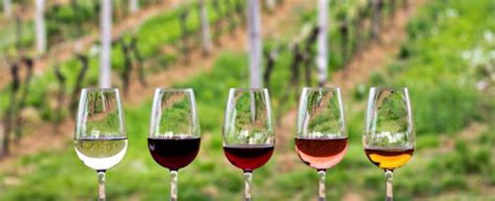 Wine Tasting - Le Chenin sous toutes ses formes