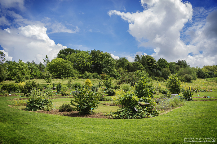 Journées du patrimoine 2019 - Visites de la collection de plantes médicinales du jardin botanique