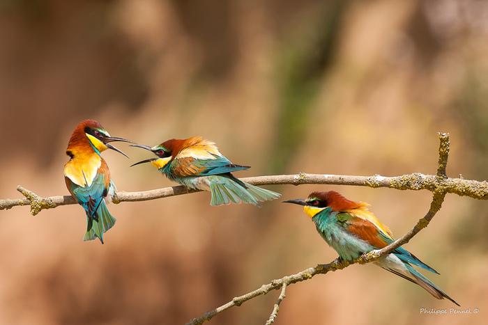 Journées du patrimoine 2020 - Annulé | Exposition : Les oiseaux des Hauts-de-France de Philippe Pennel