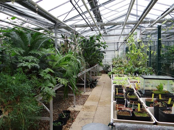Journées du patrimoine 2019 - Visite de la serre de biologie végétale de l'Université Paris-Sud