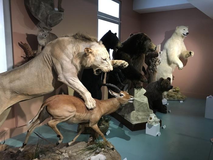 Nuit des musées 2019 -Des invertébrés jusqu'aux mammifères...