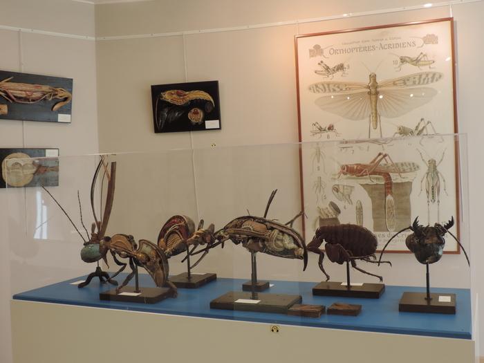 Journées du patrimoine 2020 - Visite libre du musée d'anatomie du Neubourg