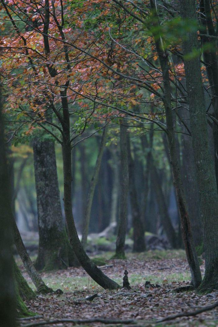 Journées du patrimoine 2019 - Balade et découverte en forêt de Rambouillet