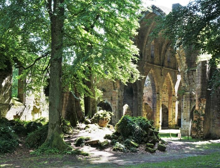 Les trésors botaniques de l'Abbaye de Trois-Fontaines