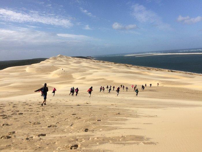 Visite commentée à la découverte des oiseaux migrateurs depuis la dune du Pilat