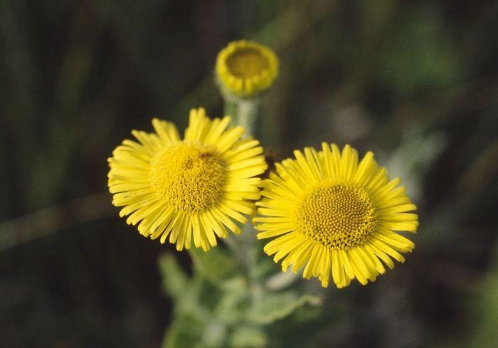Balade à la rencontre de la flore : Un jeu d'ombre et de lumière