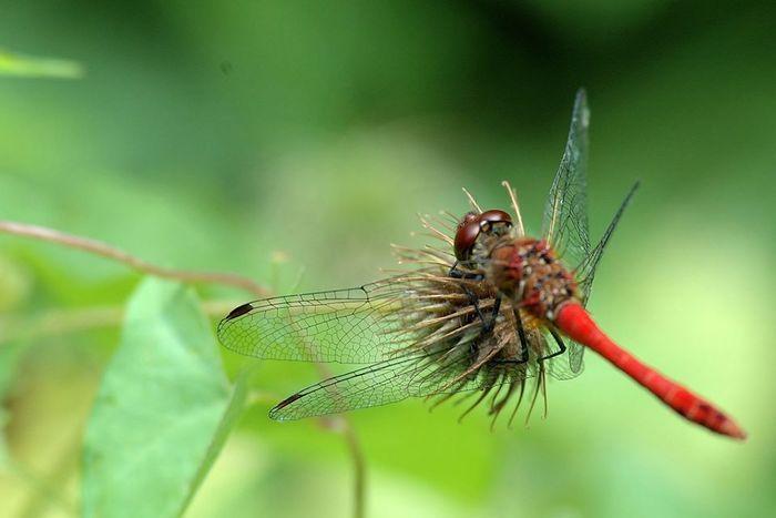 Balade : Les insectes, sur terre, sur l'eau et dans les airs
