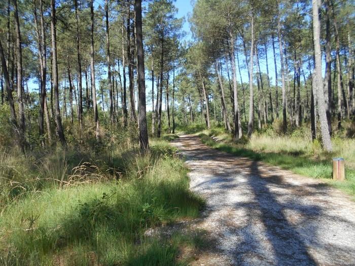 La forêt de Migelane