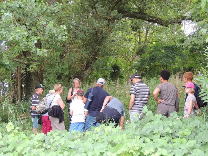 Partez à la découverte des plantes comestibles faisant partie de l'écosystème ligérien.