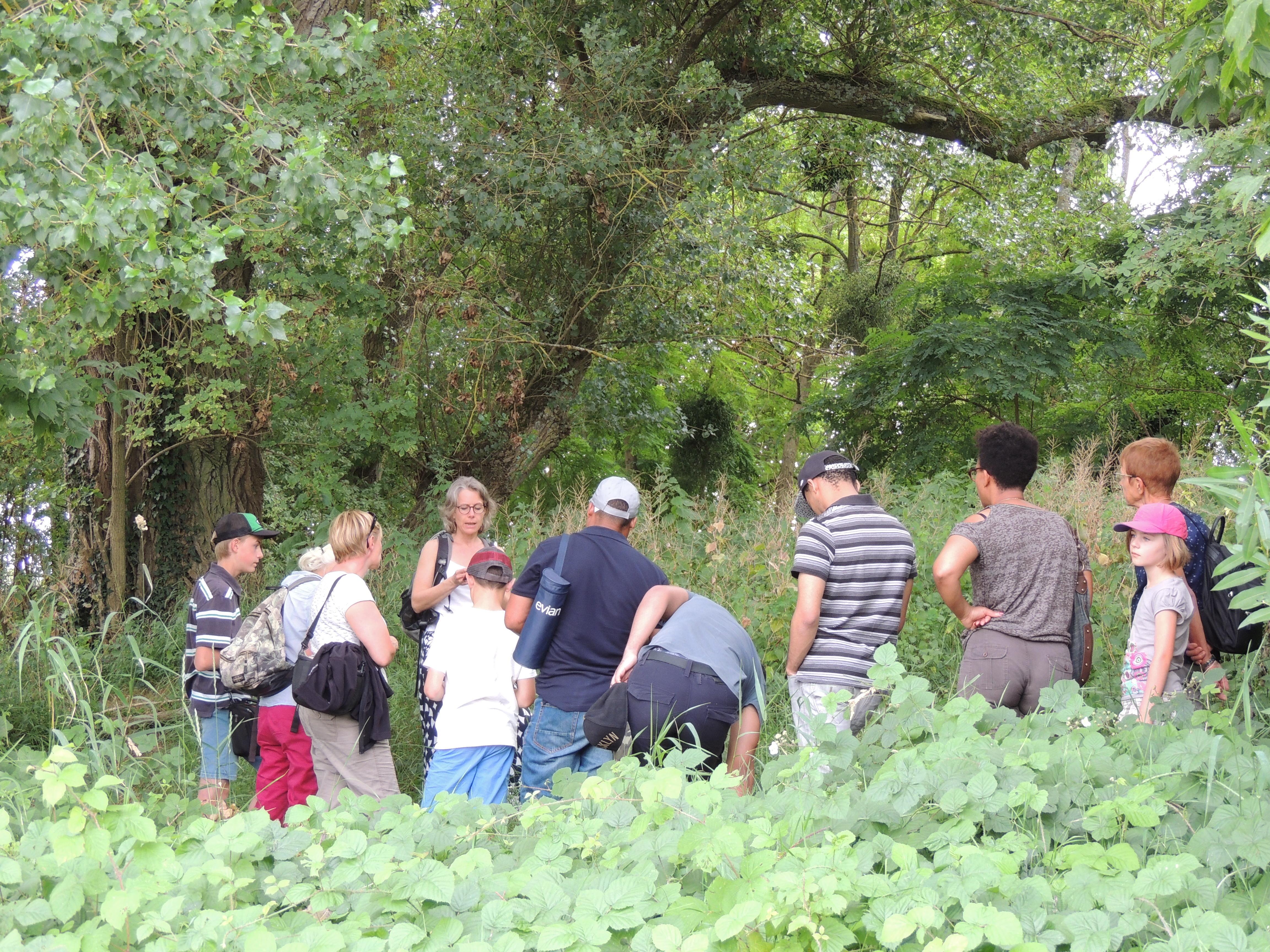 Balade : Plantes comestibles en bords de Loire