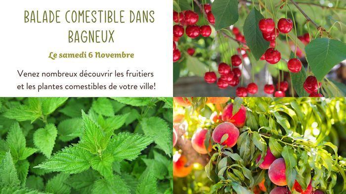 Balade Comestible dans Bagneux