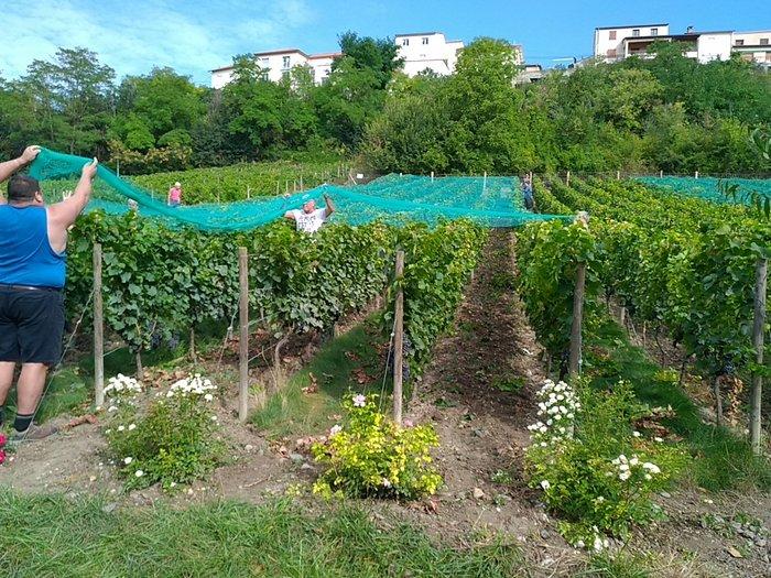 Journées du patrimoine 2019 - La grimaude : découverte des vignes associatives de Pont-du-Château