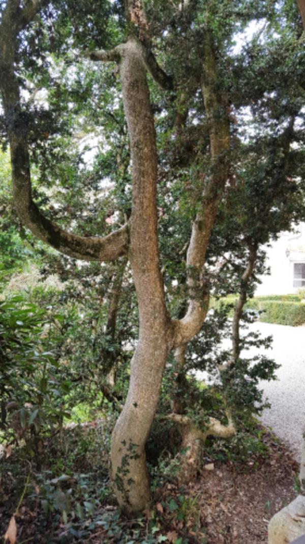 Rendez Vous aux Jardins 2018 -Jardin Carlane