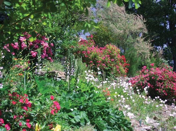 Rendez Vous aux Jardins 2018 -Jardin de l'abbaye de Valsaintes