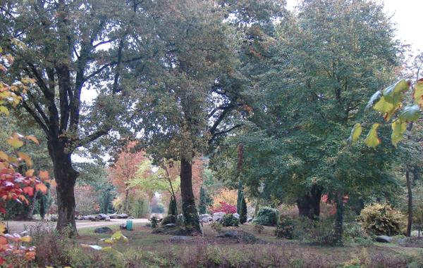 Rendez Vous aux Jardins 2018 -Arboretum de la Croix Verte