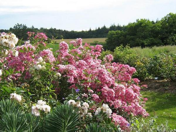 Rendez Vous aux Jardins 2018 -Jardins de Keroguic