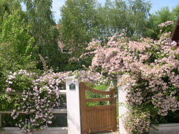Rendez Vous aux Jardins 2018 -Jardin de Daniel