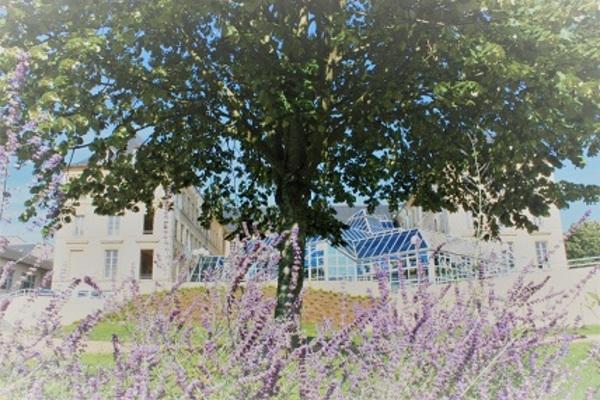 Journées du patrimoine 2019 - Exposition Mémoires Végétales, herbiers de la Nièvre
