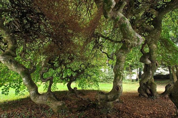 Rendez Vous aux Jardins 2018 -Parc de la Manufacture royale