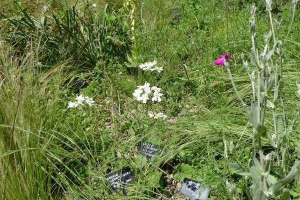 Rendez Vous aux Jardins 2018 -À fleur de montagne