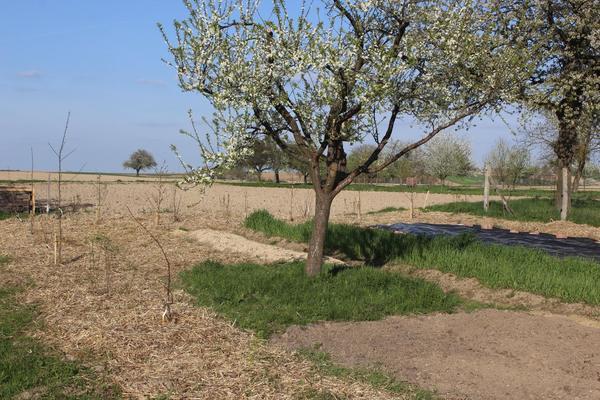 Rendez Vous aux Jardins 2018 -Jardins Nature'lich