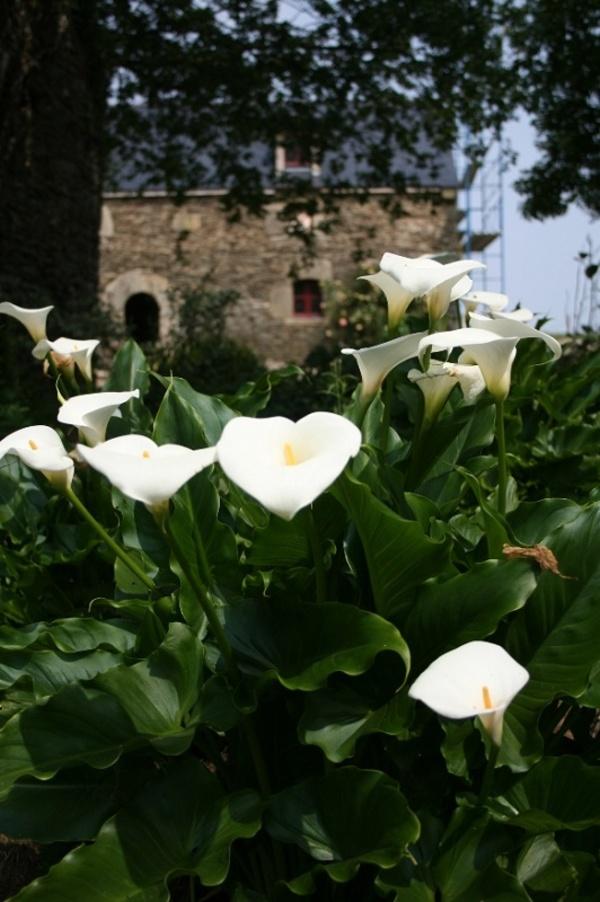 Rendez Vous aux Jardins 2018 -Les jardins d'Ewen