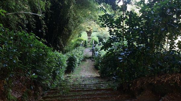 Journées du patrimoine 2017 - Des hommes et des plantes à La Réunion