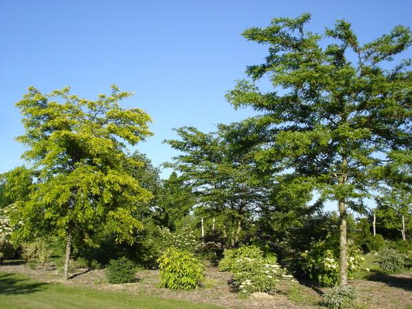 Arboretum de la Petite Loiterie