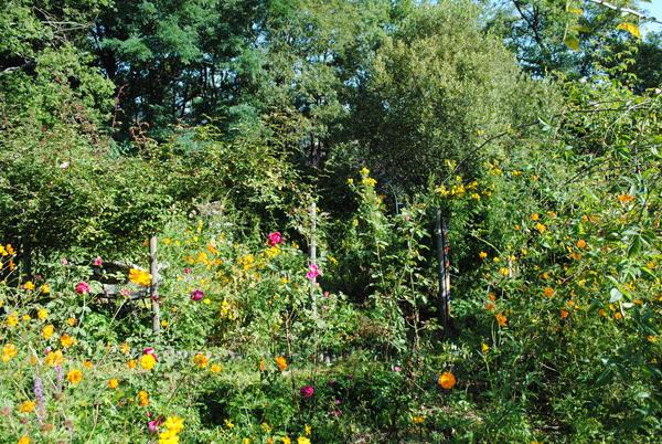 Rendez Vous aux Jardins 2018 -Le jardin des plantes à couleurs