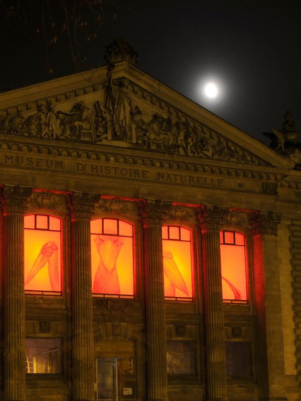 Nuit des musées 2018 -Muséum d'histoire naturelle de Nantes