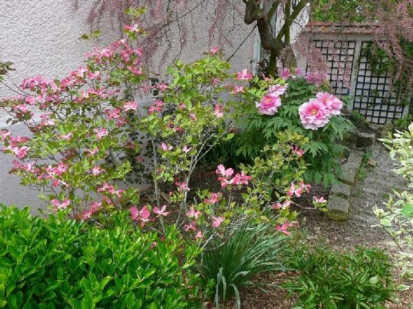Rendez Vous aux Jardins 2018 -Le jardin rose pivoine