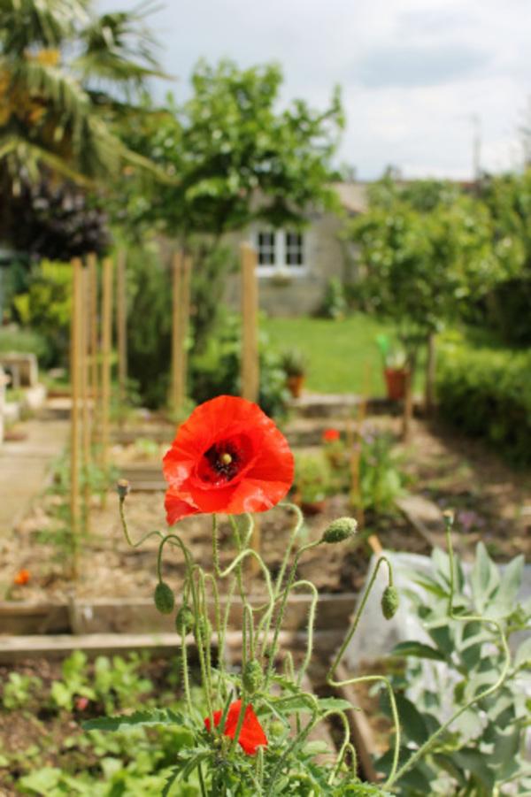 Rendez Vous aux Jardins 2018 -Le jardin Liberté