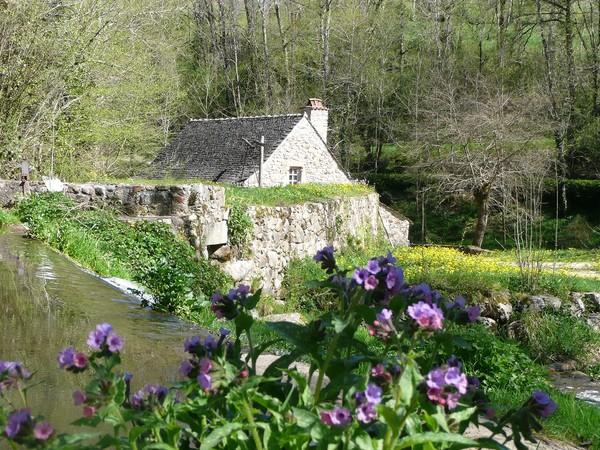 Rendez Vous aux Jardins 2018 -Sentier botanique et martinet de la Ramonde