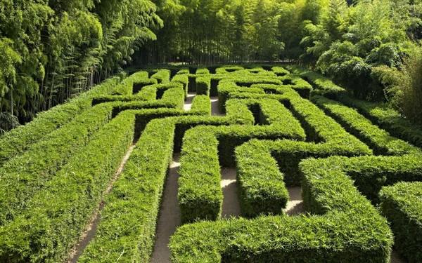 Rendez Vous aux Jardins 2018 -La bambouseraie en Cévennes