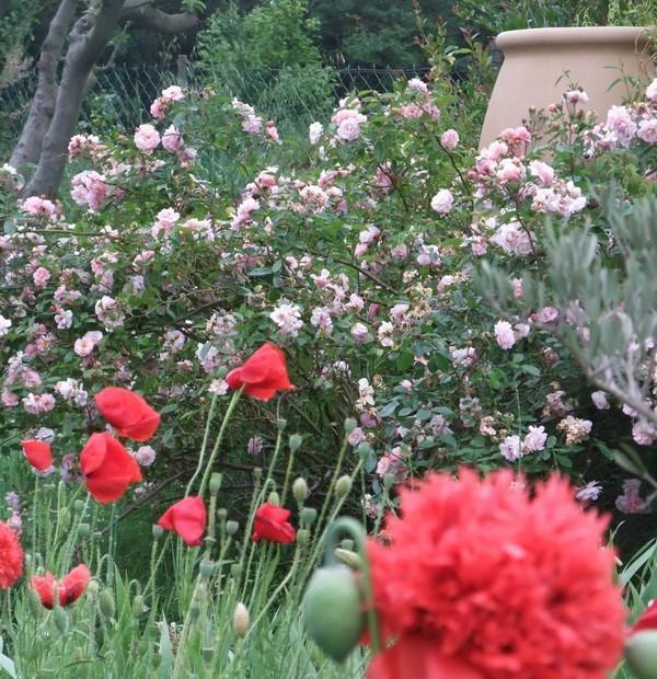 Rendez Vous aux Jardins 2018 -Jardin Pampaligousto