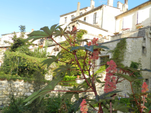 Rendez Vous aux Jardins 2018 -Jardin médiéval de Jonzac