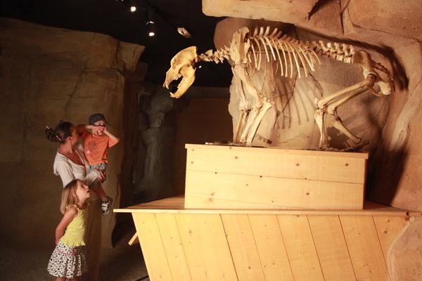 Crédits image : © Musée de l'ours des cavernes