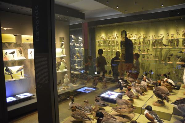 Crédits image : Muséum départemental du Var